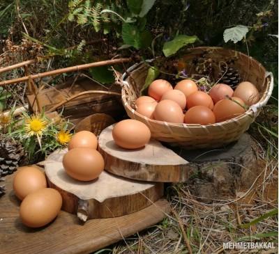 Çiftlik Yumurtası (Serbest Gezen)